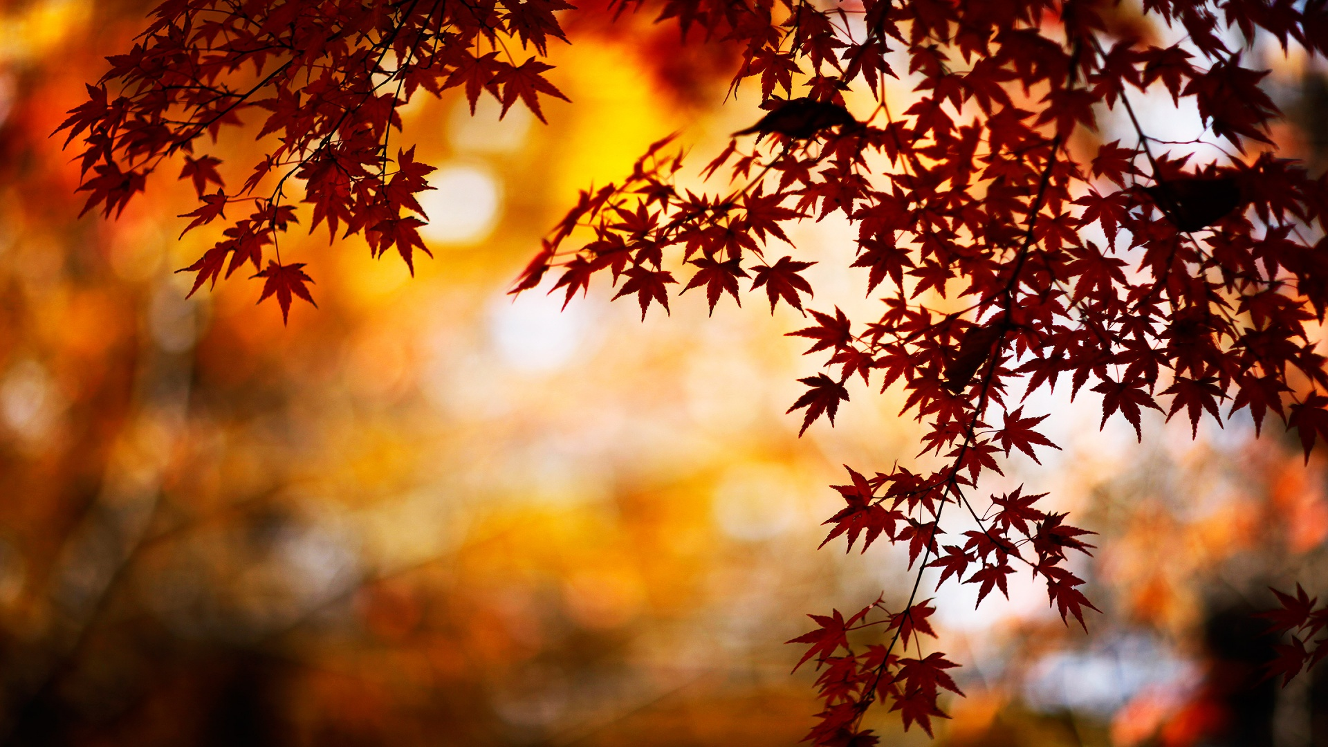 Fall Wallpapers HD | PixelsTalk Net