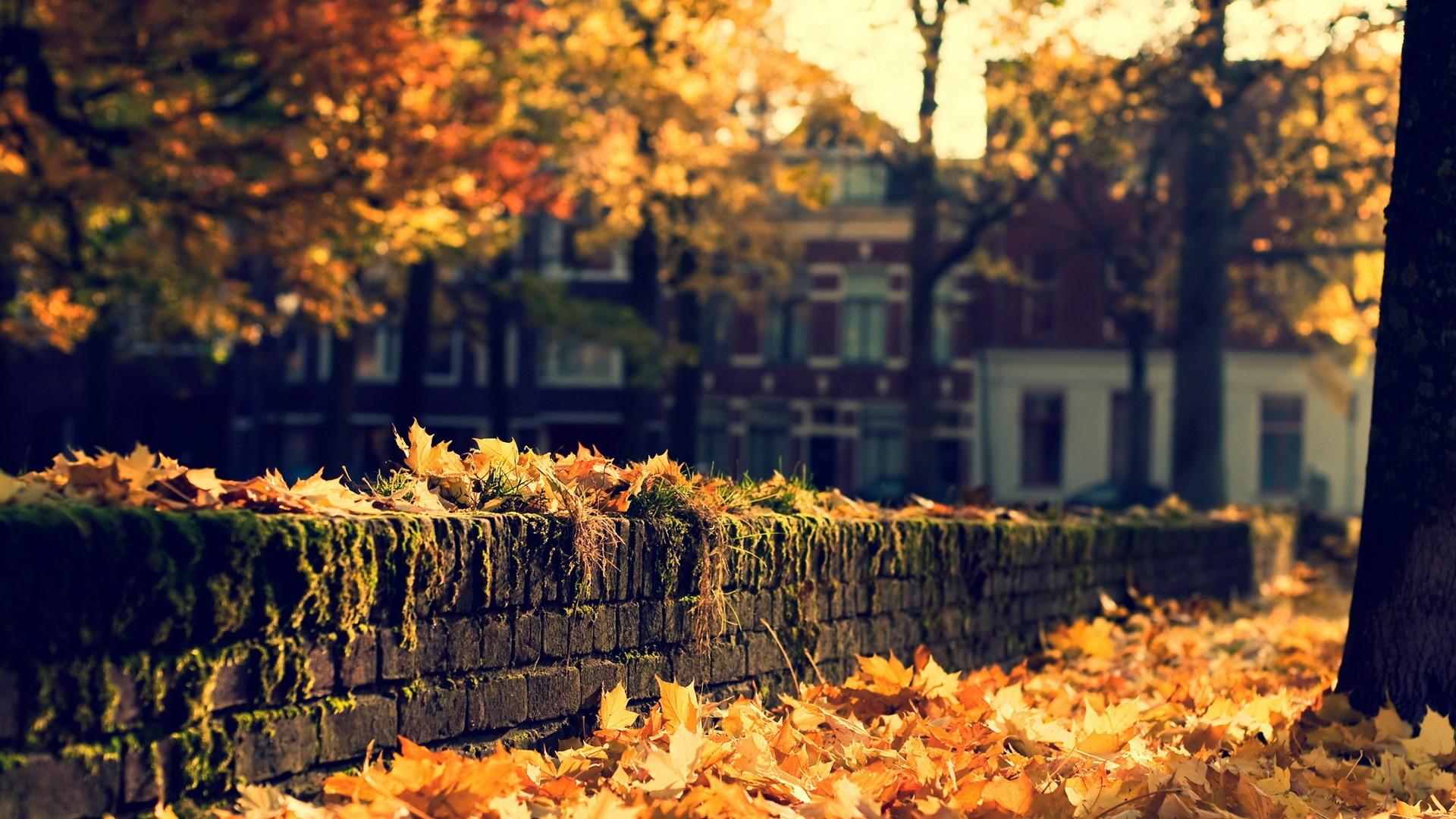 Free HD Fall Wallpapers   PixelsTalk Net