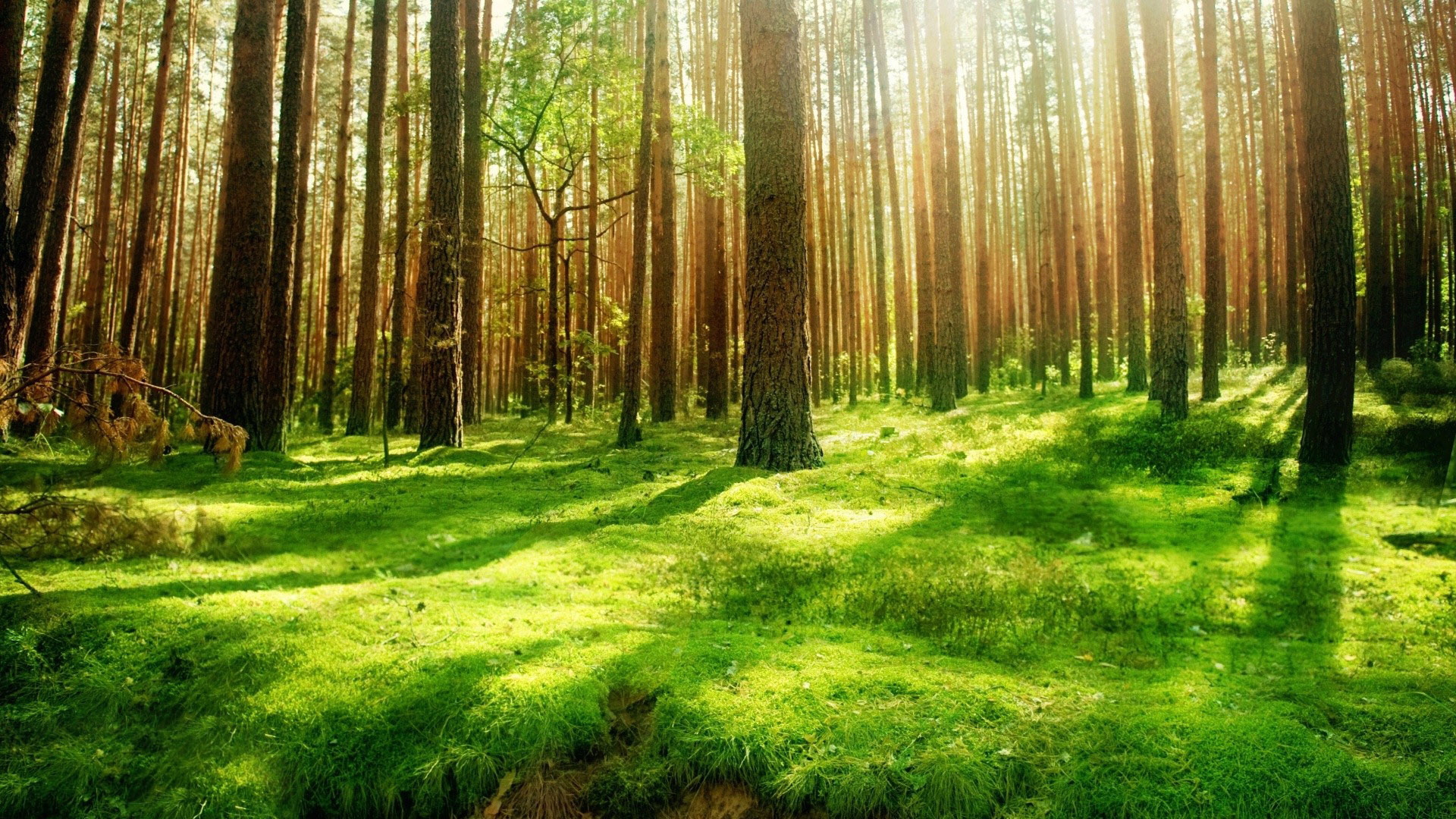 Collection of Backgrounds Forest on HDWallpapers