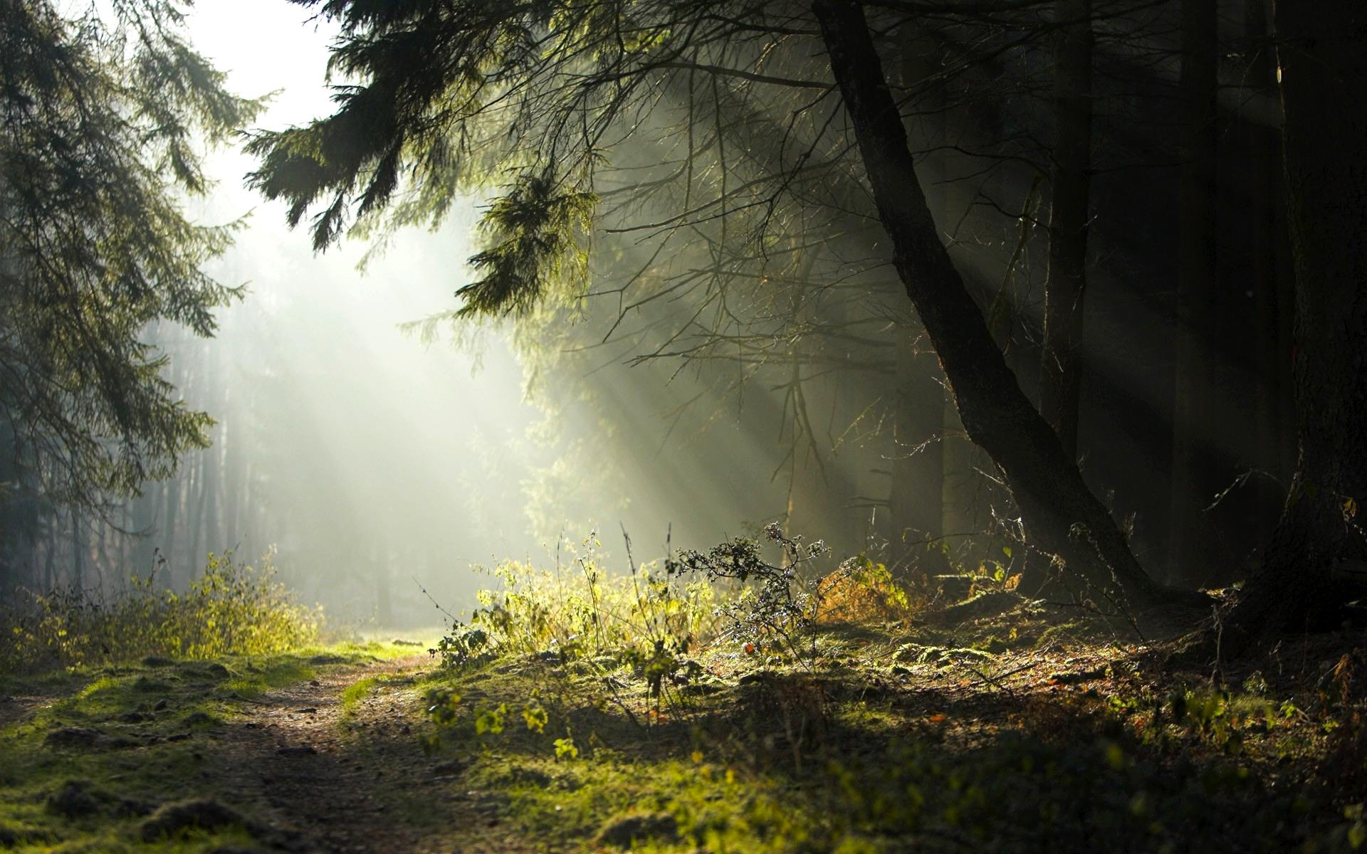 Forest Desktop Backgrounds Free Group (79+)