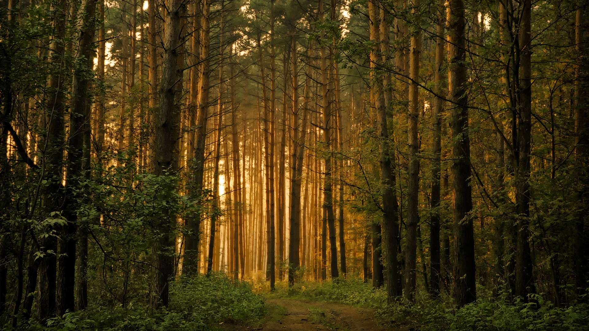 38+ Forest Desktop Background, HD Quality Forest Images, Forest