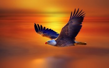 208 Bald Eagle HD Wallpapers | Backgrounds - Wallpaper Abyss
