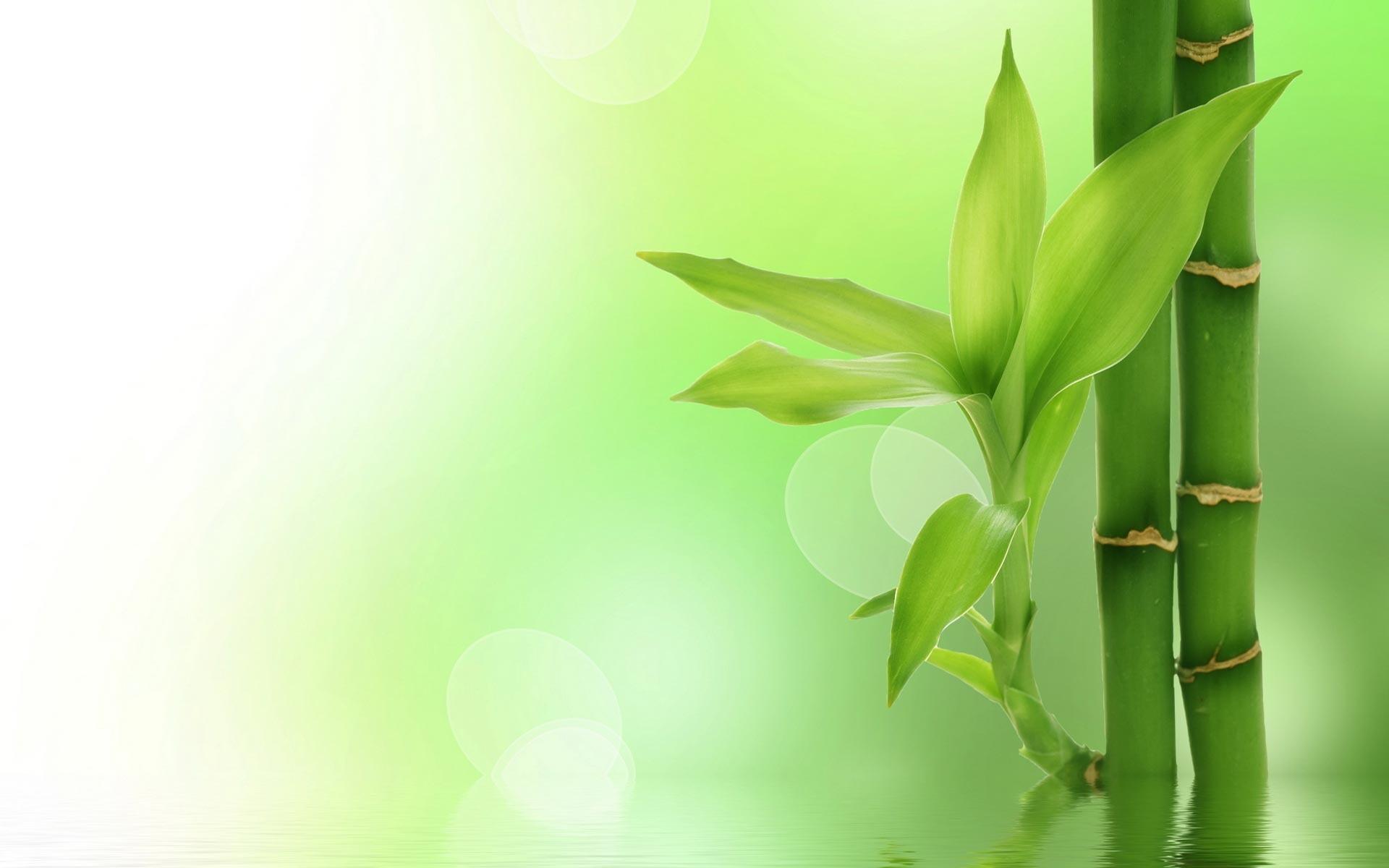 bamboo wallpaper - sf wallpaper