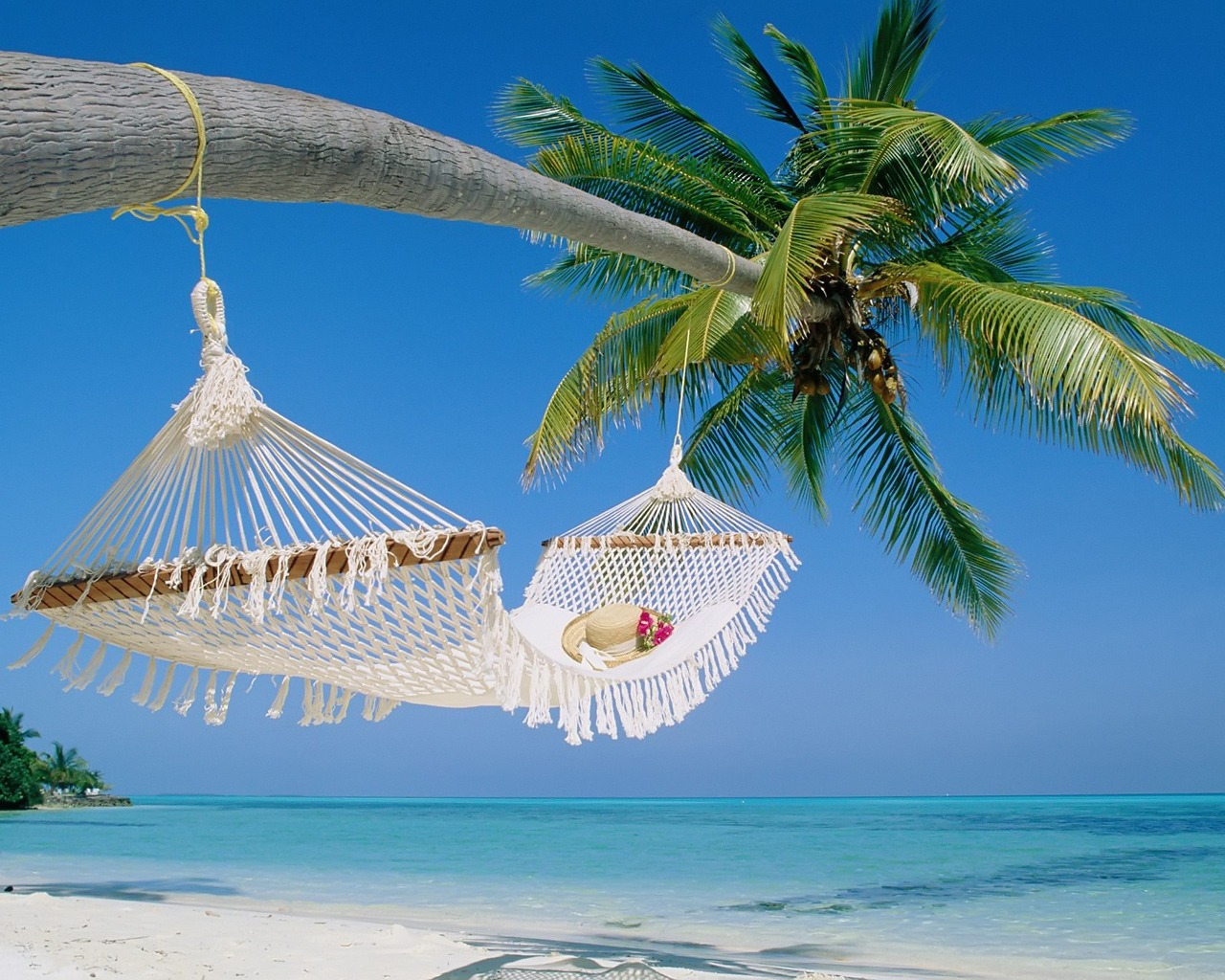 beach hammock wallpaper