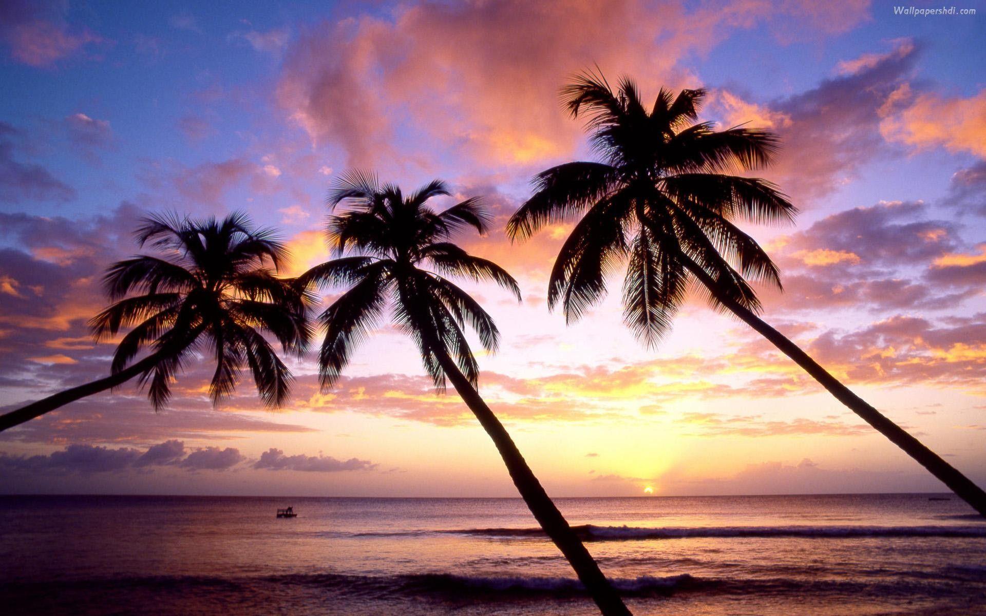 Palm Tree Desktop Wallpaper
