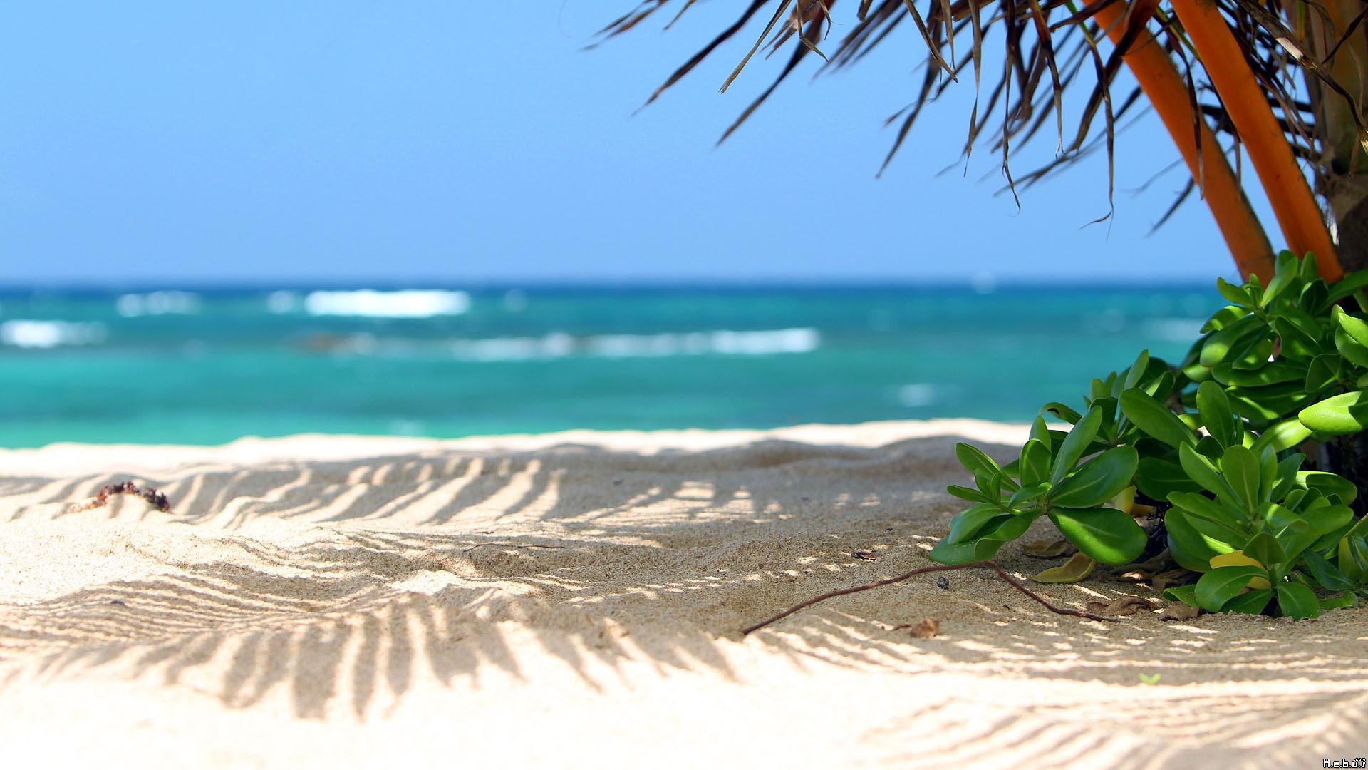 Live Beach Scenes Wallpapers Src