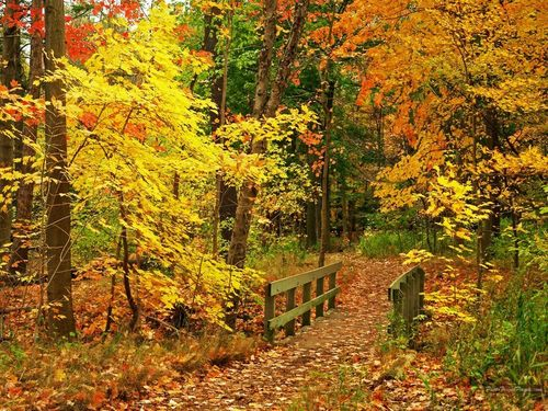 Autumn images Beautiful Fall Wallpapers HD wallpaper and