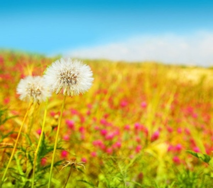 Beautiful nature background images free stock photos download