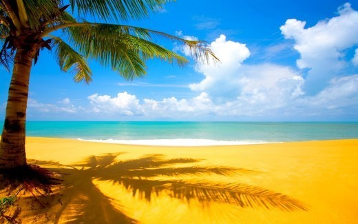 Beautiful Beach and Palms Wallpapers for Your Desktop - noupe