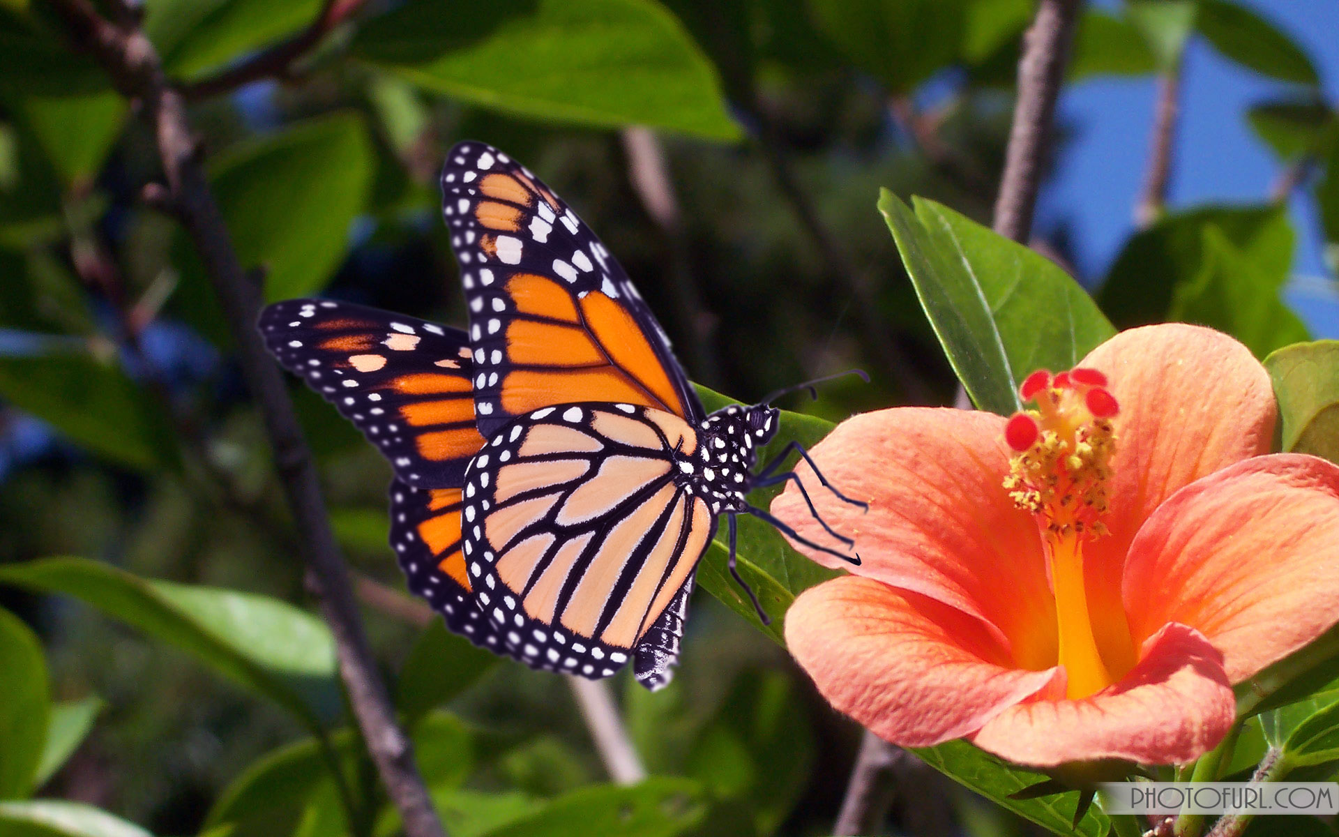 1000+ images about BUTTERFLIES & NATURE on Pinterest | Butterfly