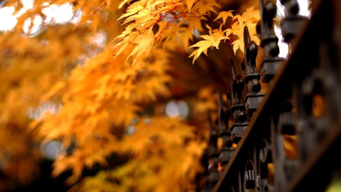 Autumn beautiful computer desktop wallpaper 47830 - Autumn Theme