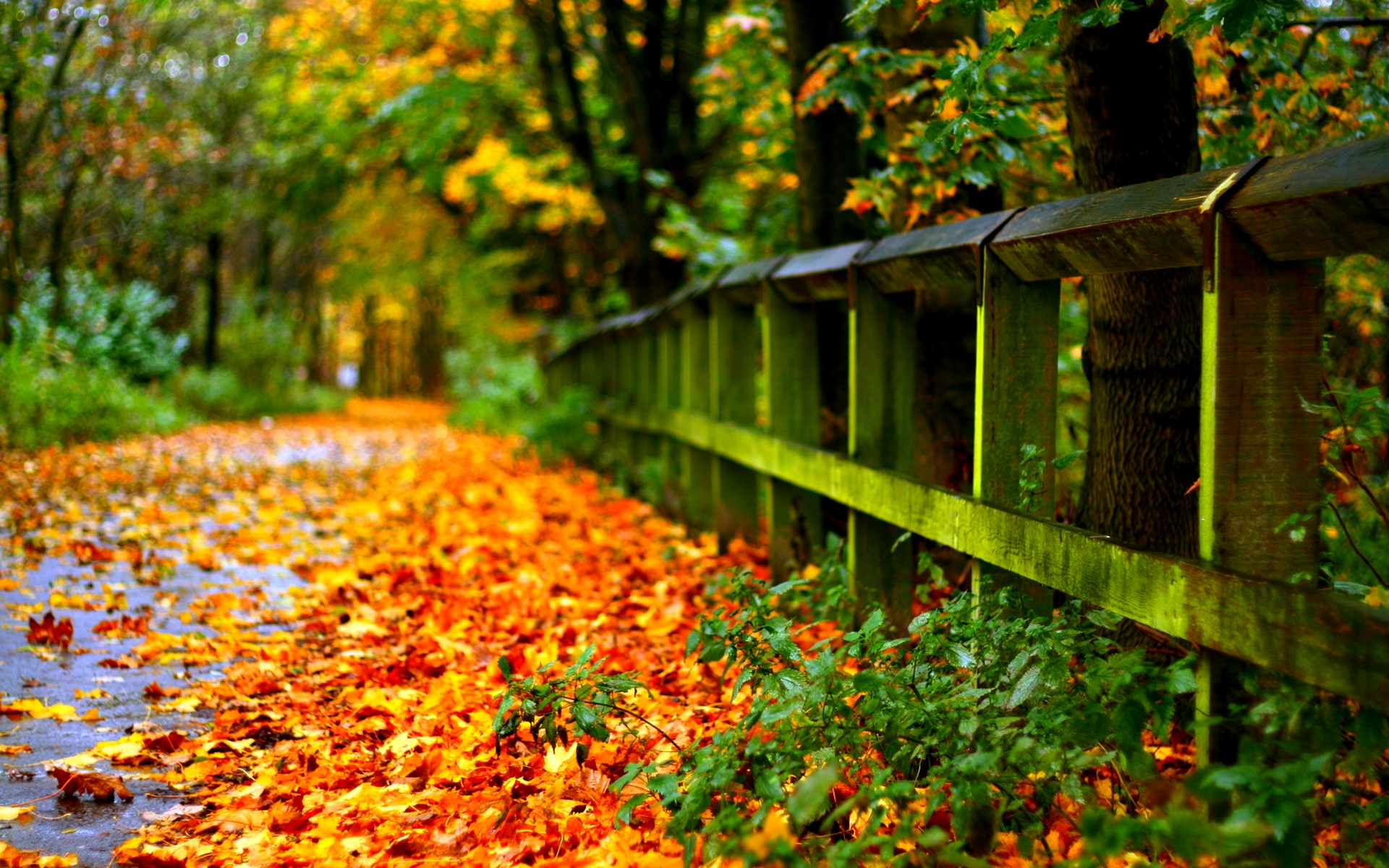 Beautiful Fall Wallpaper Sf Wallpaper