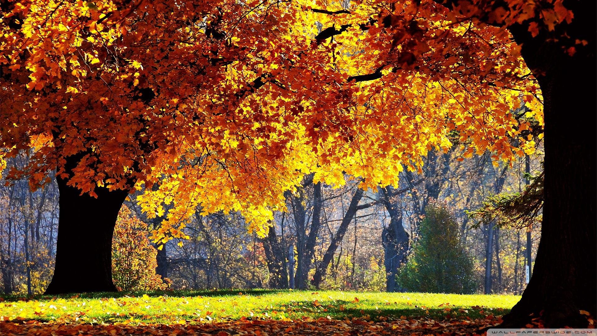 Beautiful Fall HD desktop wallpaper : Widescreen : High Definition