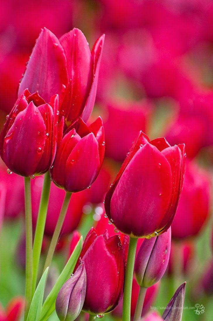 1000+ ideas about Beautiful Flowers on Pinterest | Pretty flowers