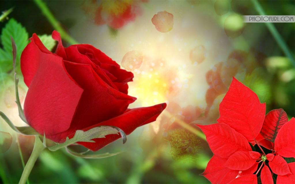 Beautiful Flowers Wallpapers For Desktop HD Group (78+)