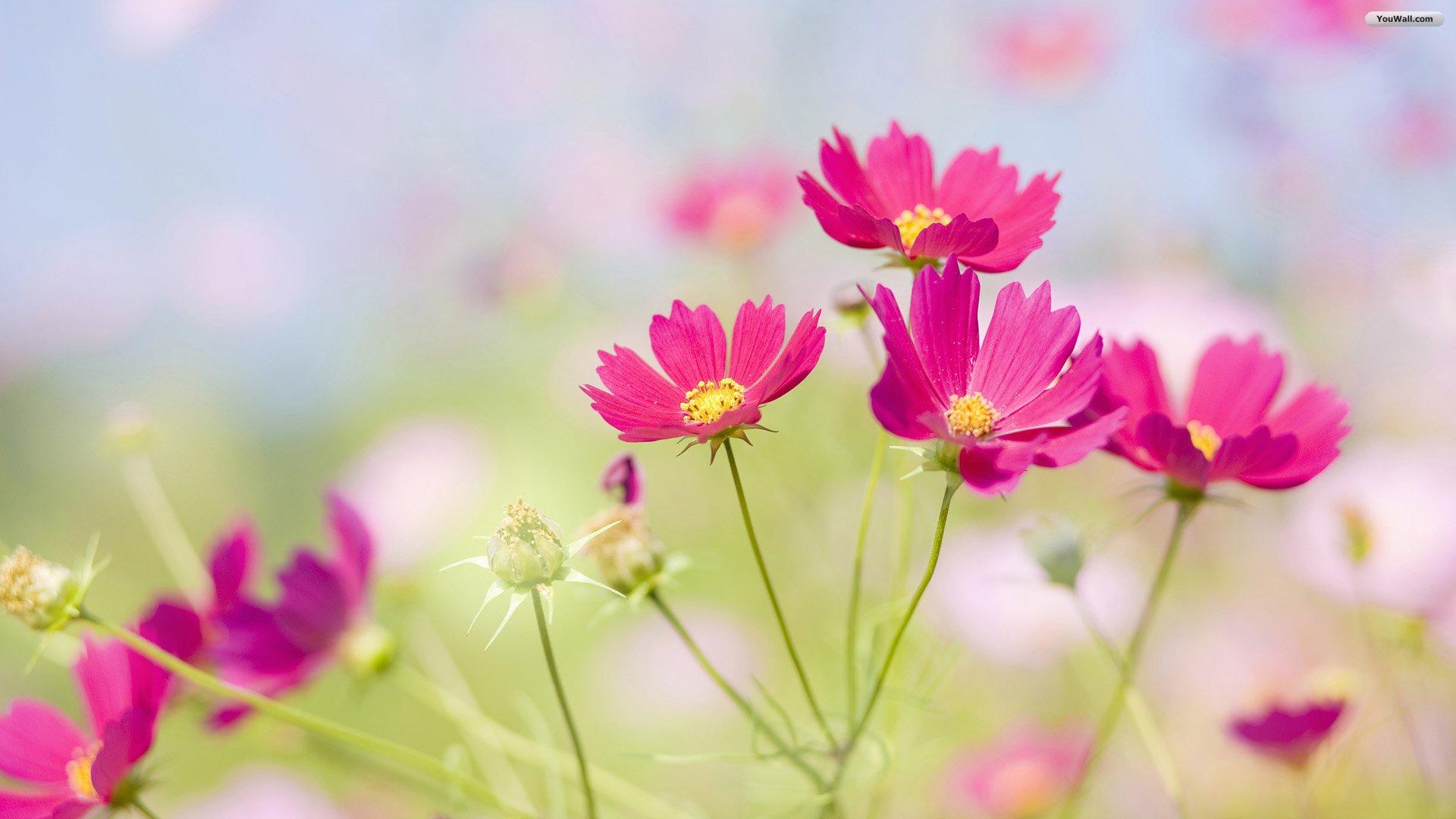 Desktop Backgrounds: Beautiful Flower Wallpaper, Beautiful Flower