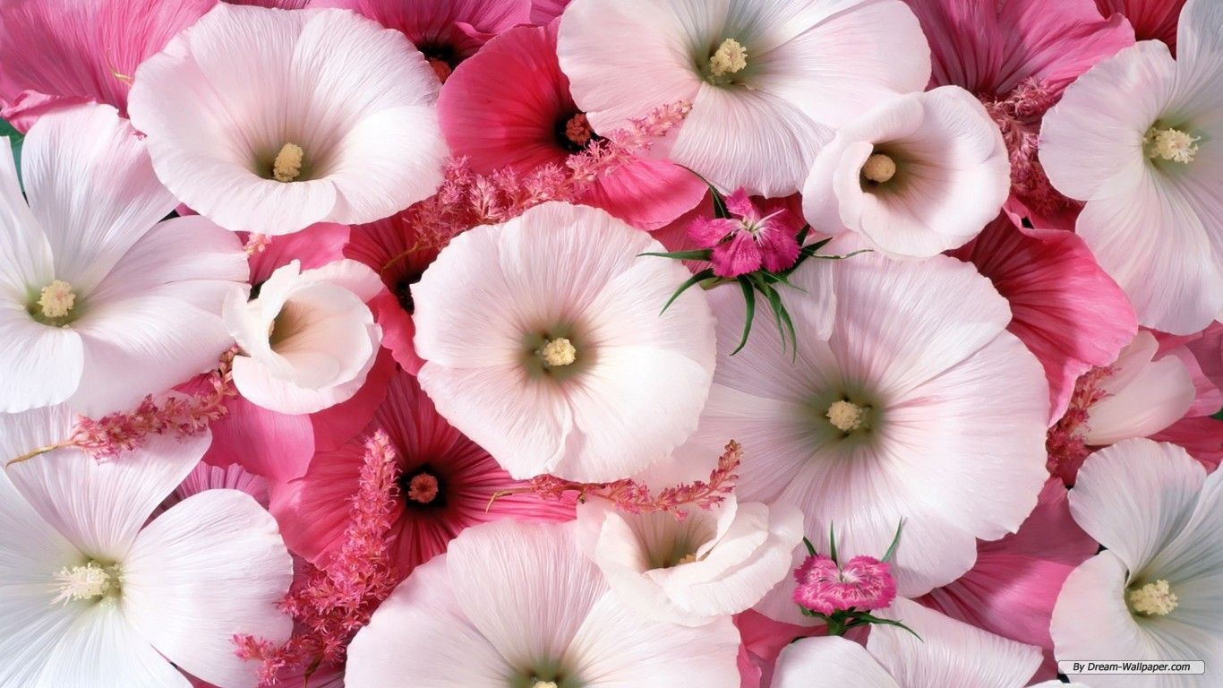 Flowers For Wallpapers Free Download Group (81+)
