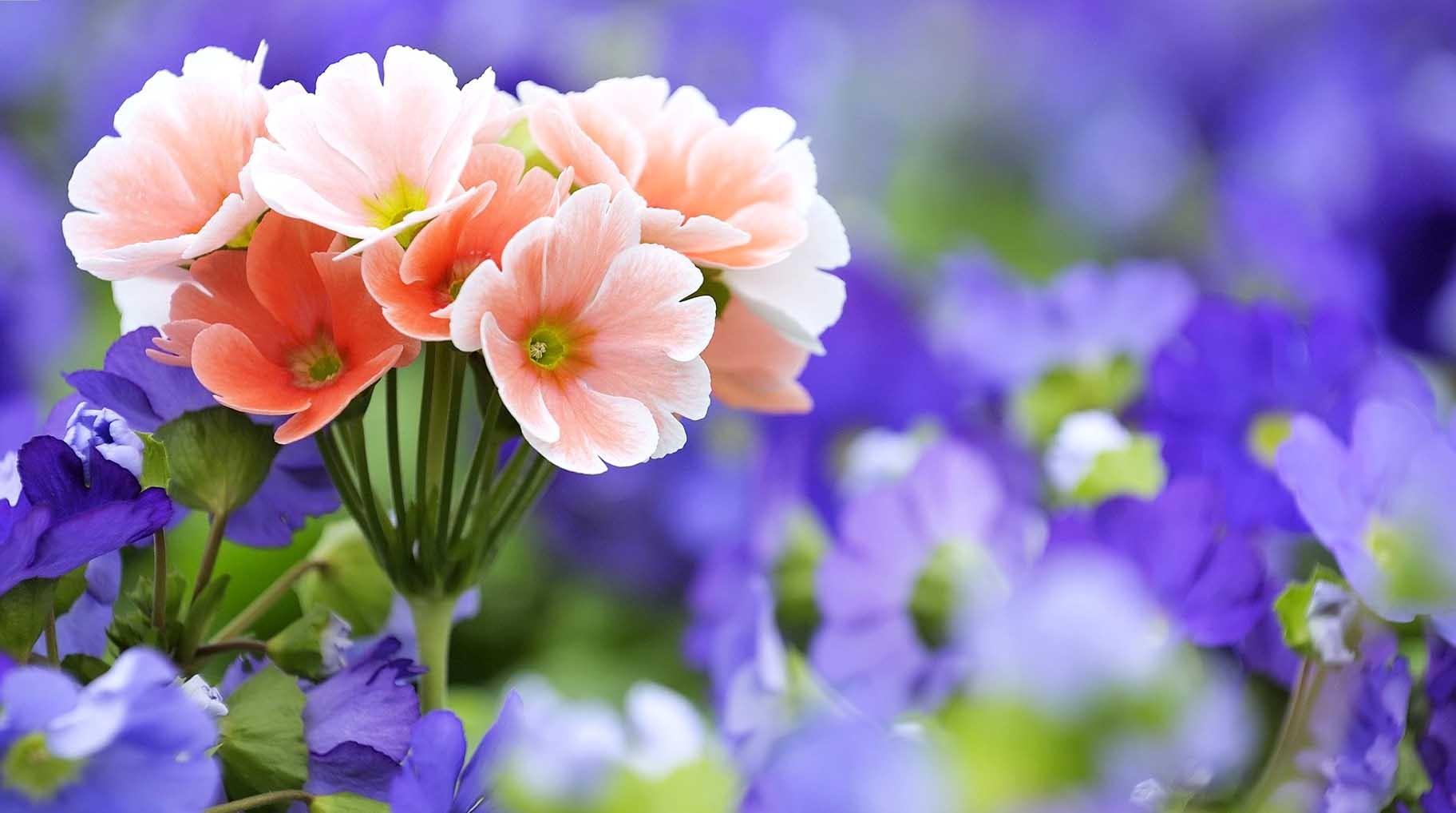 Collection of Beautiful Flowers Wallpaper Free Download on