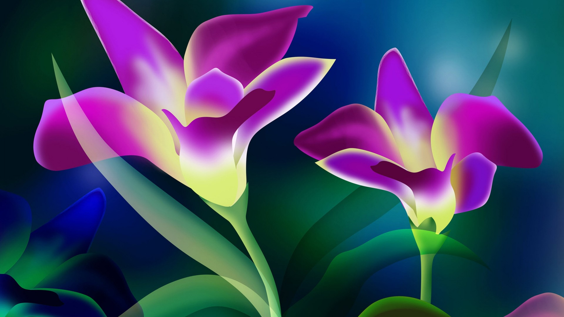 Beautiful Flower Wallpaper Hd Free Download 1704 : Wallpapers13 com