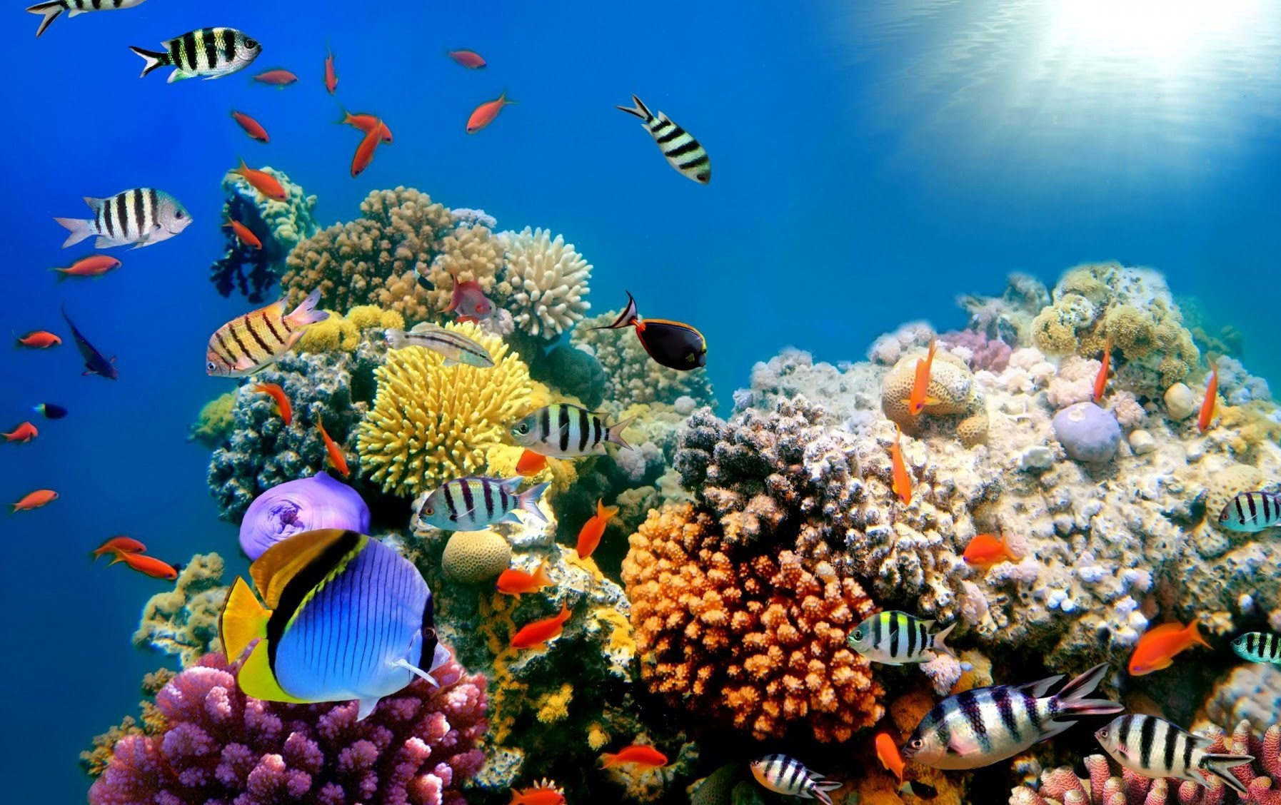 Beautiful Oceans - Beautiful Oceans