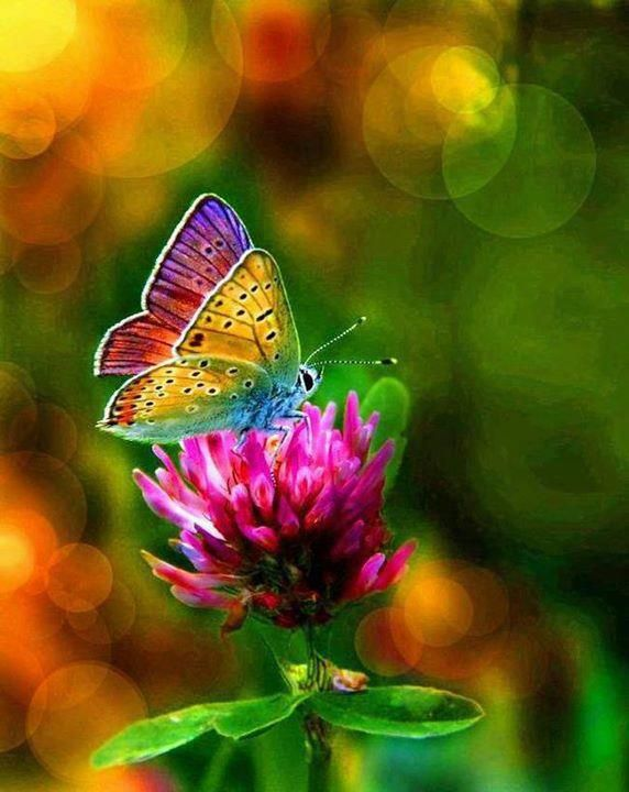 17+ ideas about Beautiful Butterflies on Pinterest | Butterflies