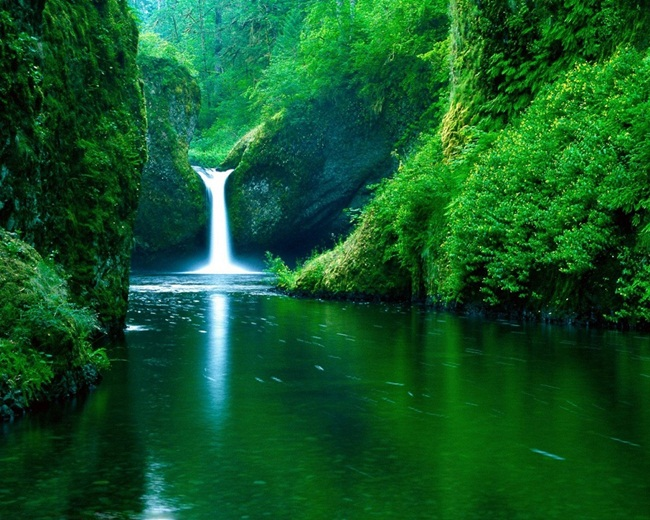 Beautiful Green Nature (28 Photos) | funmag org
