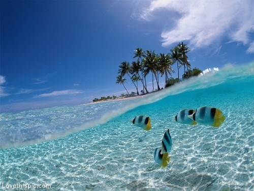 Beautiful Ocean Pictures, Photos, and Images for Facebook, Tumblr