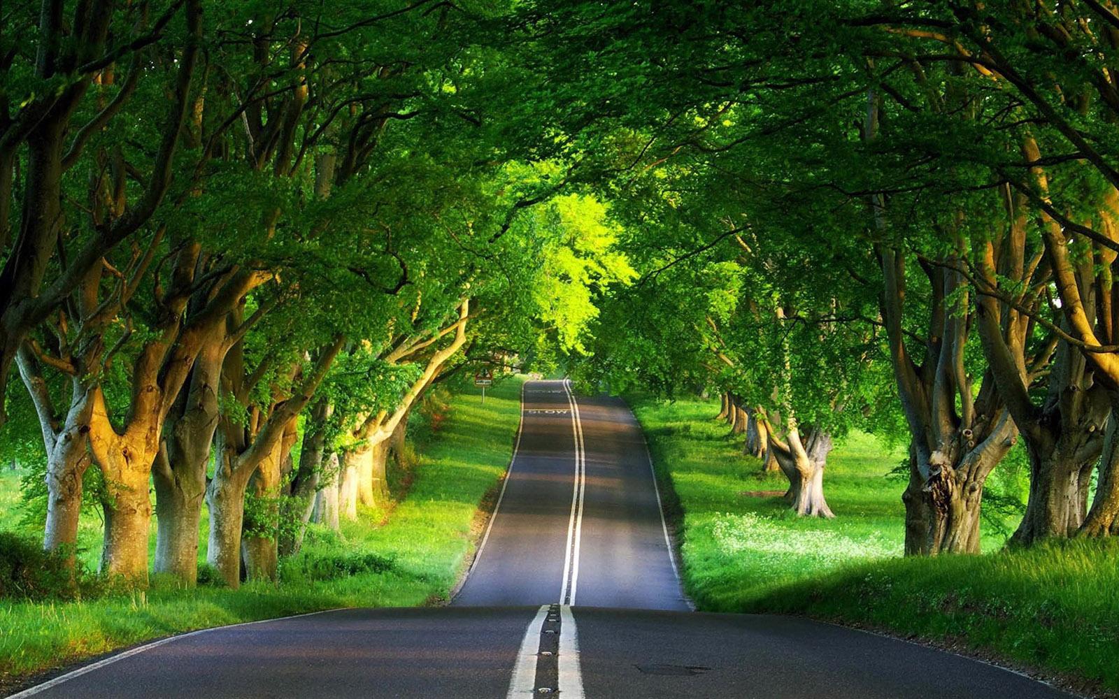 Download Cool Beautiful Nature Road Wallpaper | Full HD Wallpapers