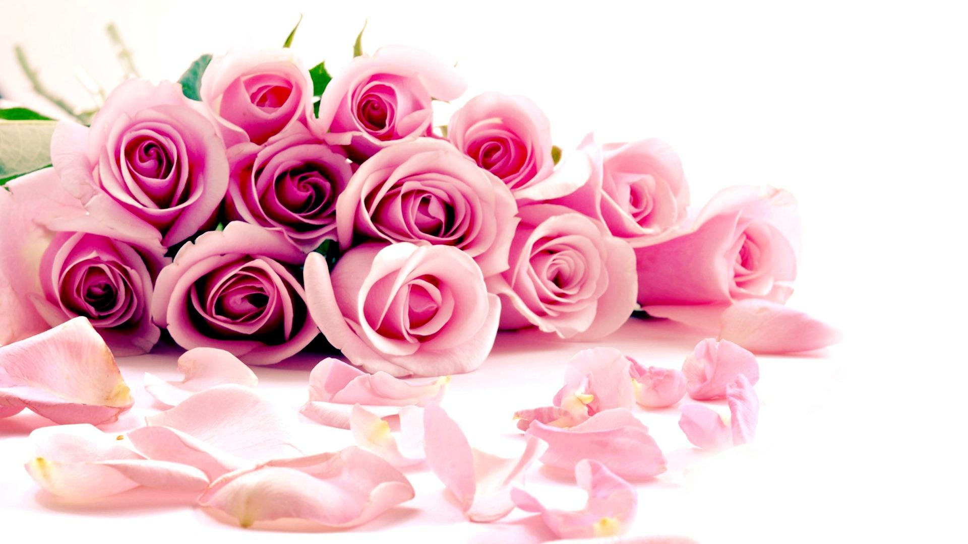 beautiful pink roses wallpapers - sf wallpaper