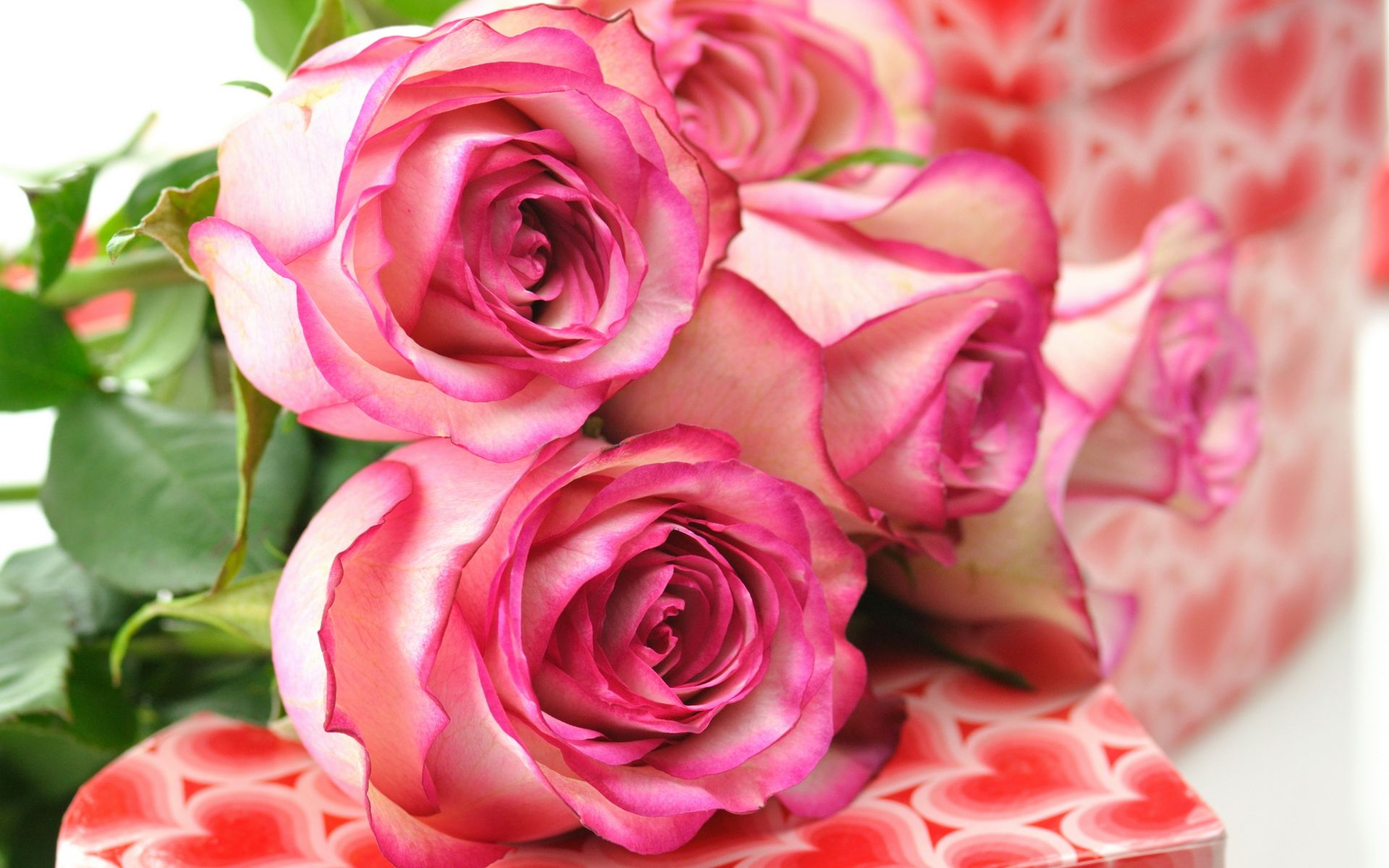 Beautiful Pink Roses wallpaper | 1920x1200 | #78119