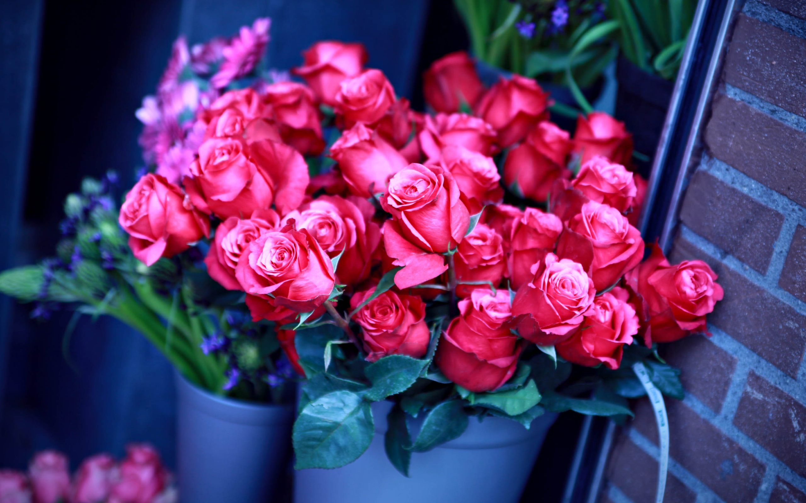 Beautiful Red Roses Basket Wallpaper HD Download For Desktop