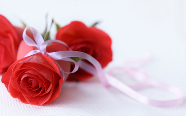 17 Beautiful Red Rose Wallpapers