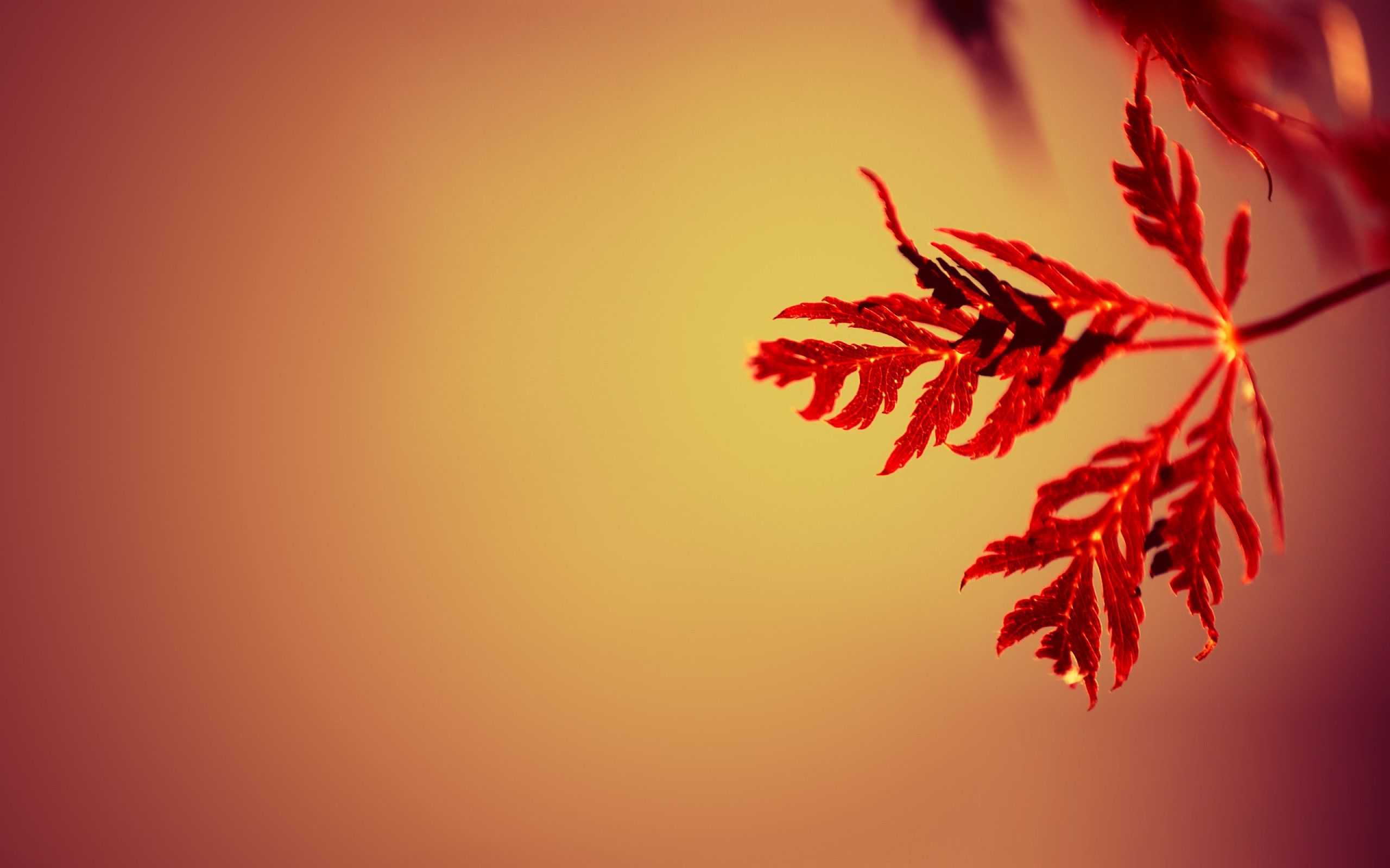 Beautiful Red Leaves wallpaper | 2560x1600 | #29393