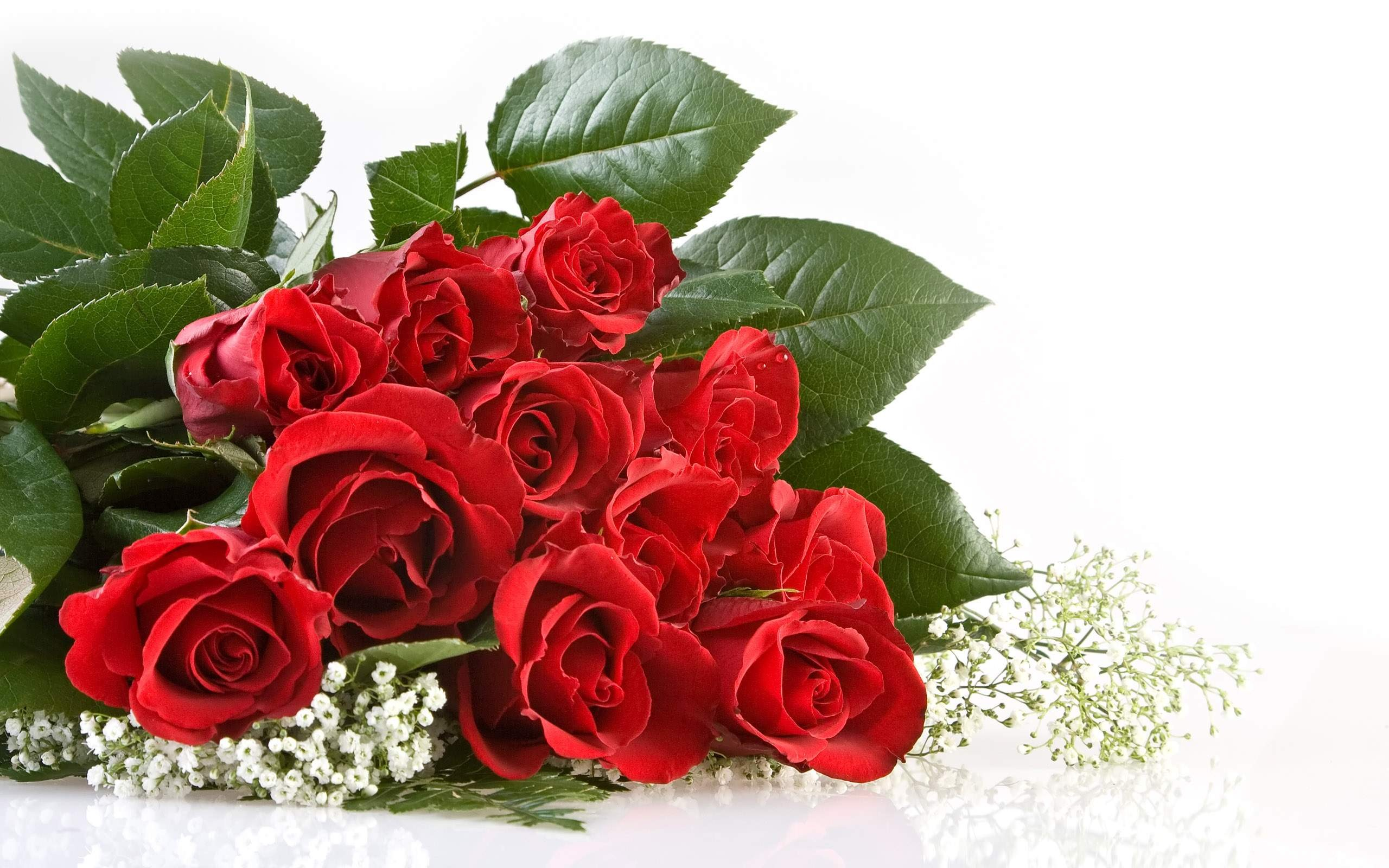 Red Rose Wallpapers Free Download Group (70+)