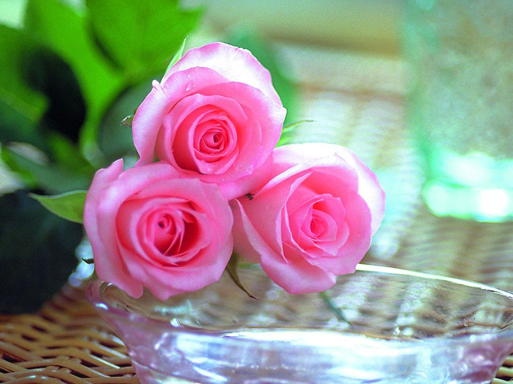 Beautiful Roses Wallpapers (20 Photos) | funmag org