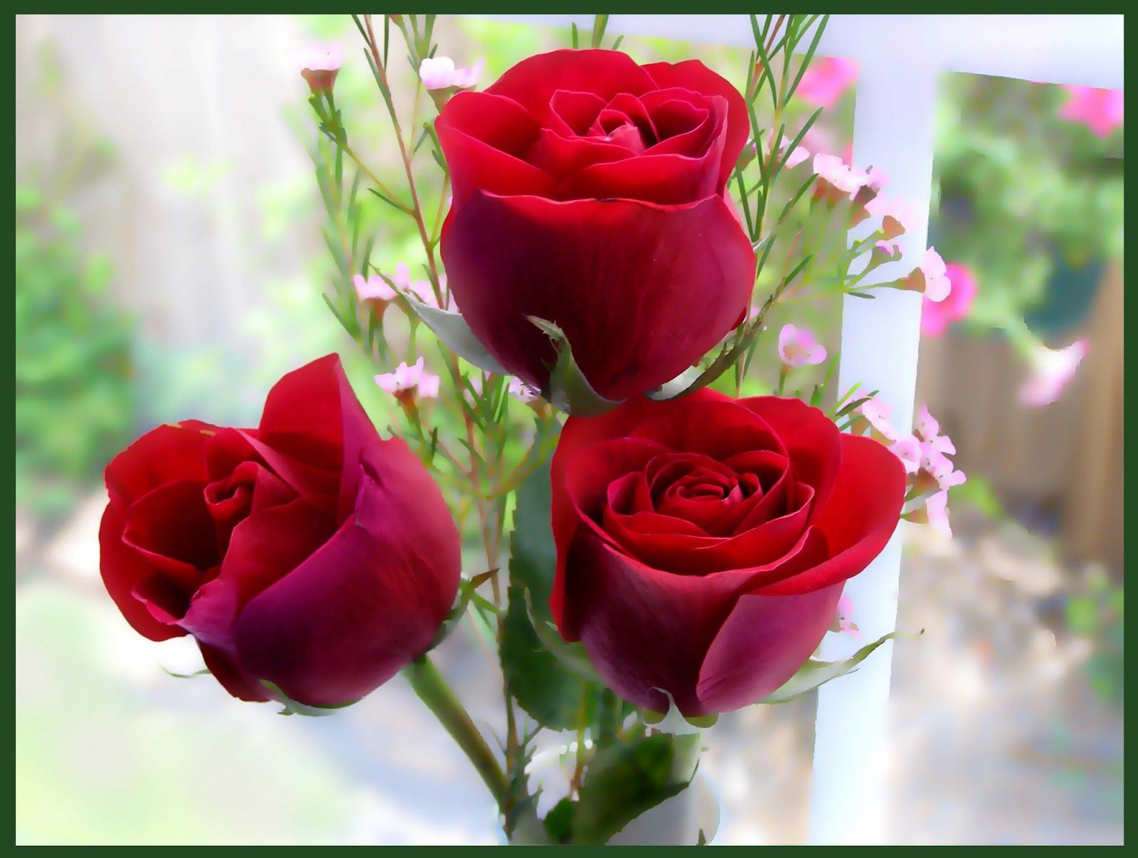 Beautiful Rose Pics, Custom HD 47 Beautiful Rose Wallpapers