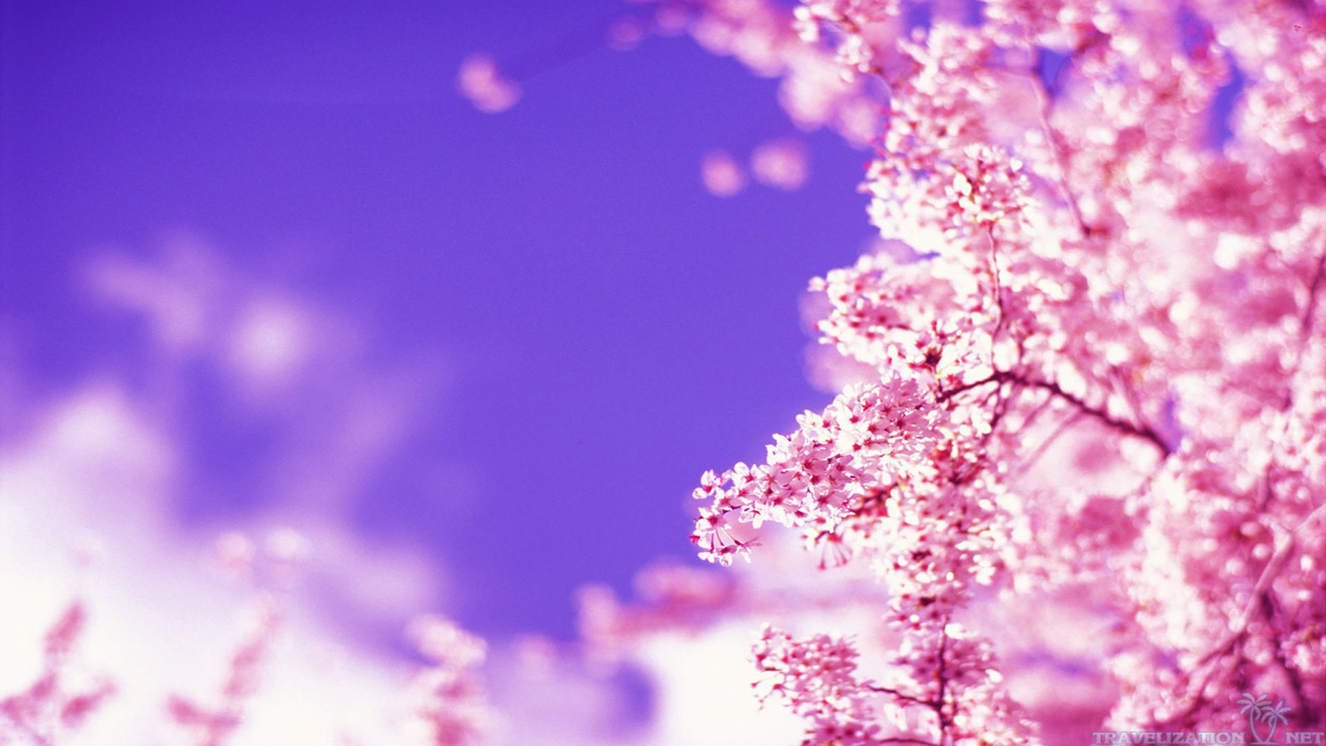 Beautiful Spring Wallpapers Page 1