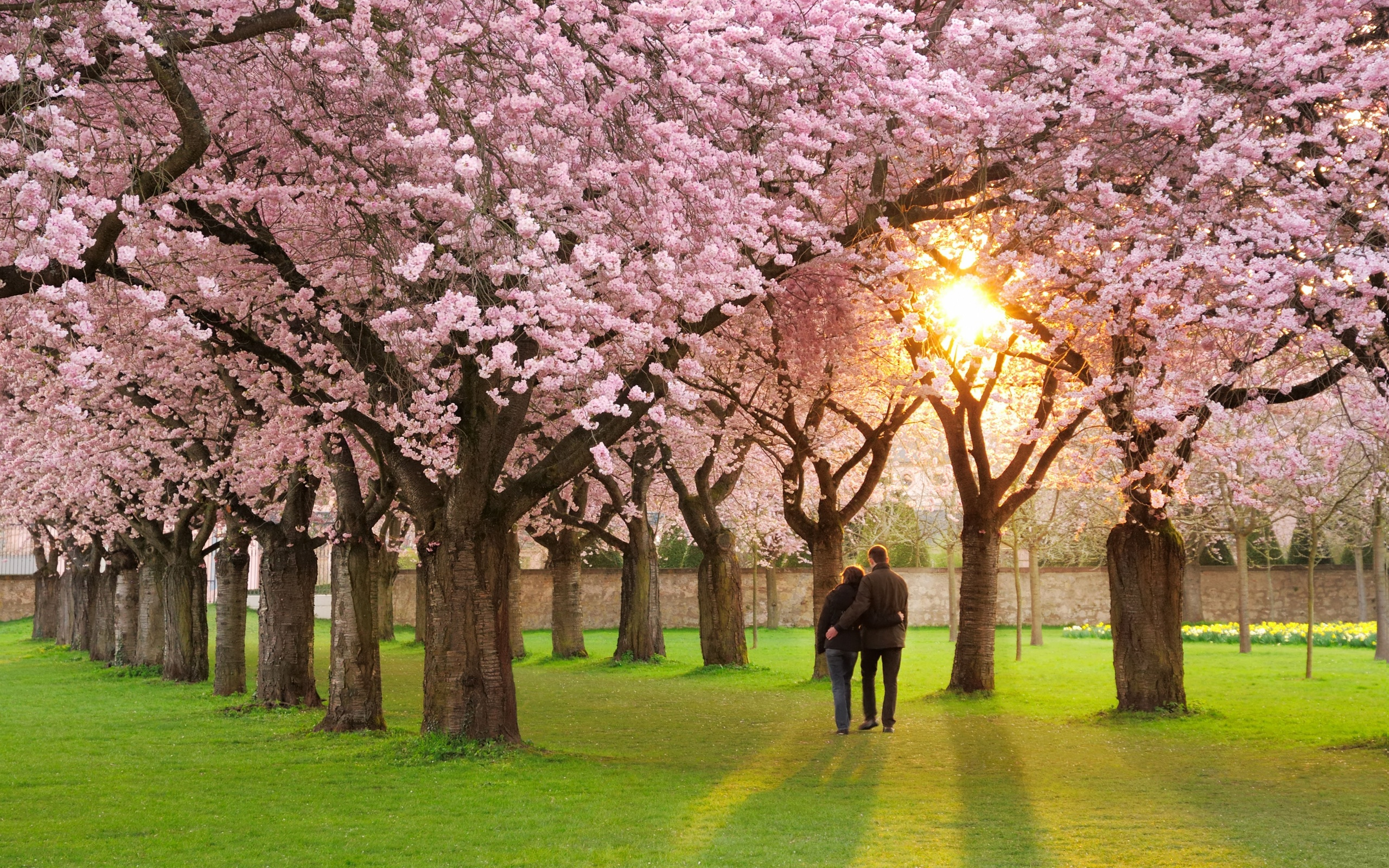 Beautiful-spring-season-hd-most-beautiful-wallpaper-free -