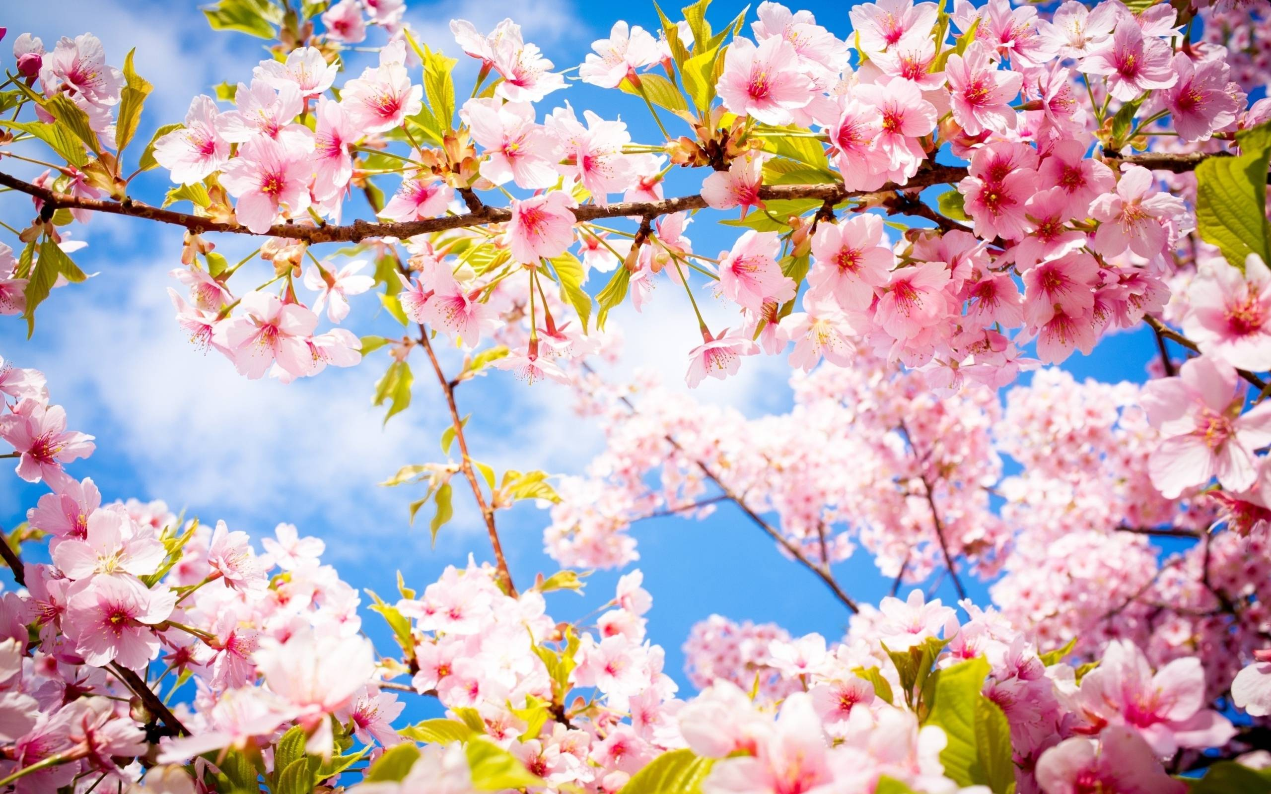 Beautiful Spring Wallpapers - Wallpaper Cave