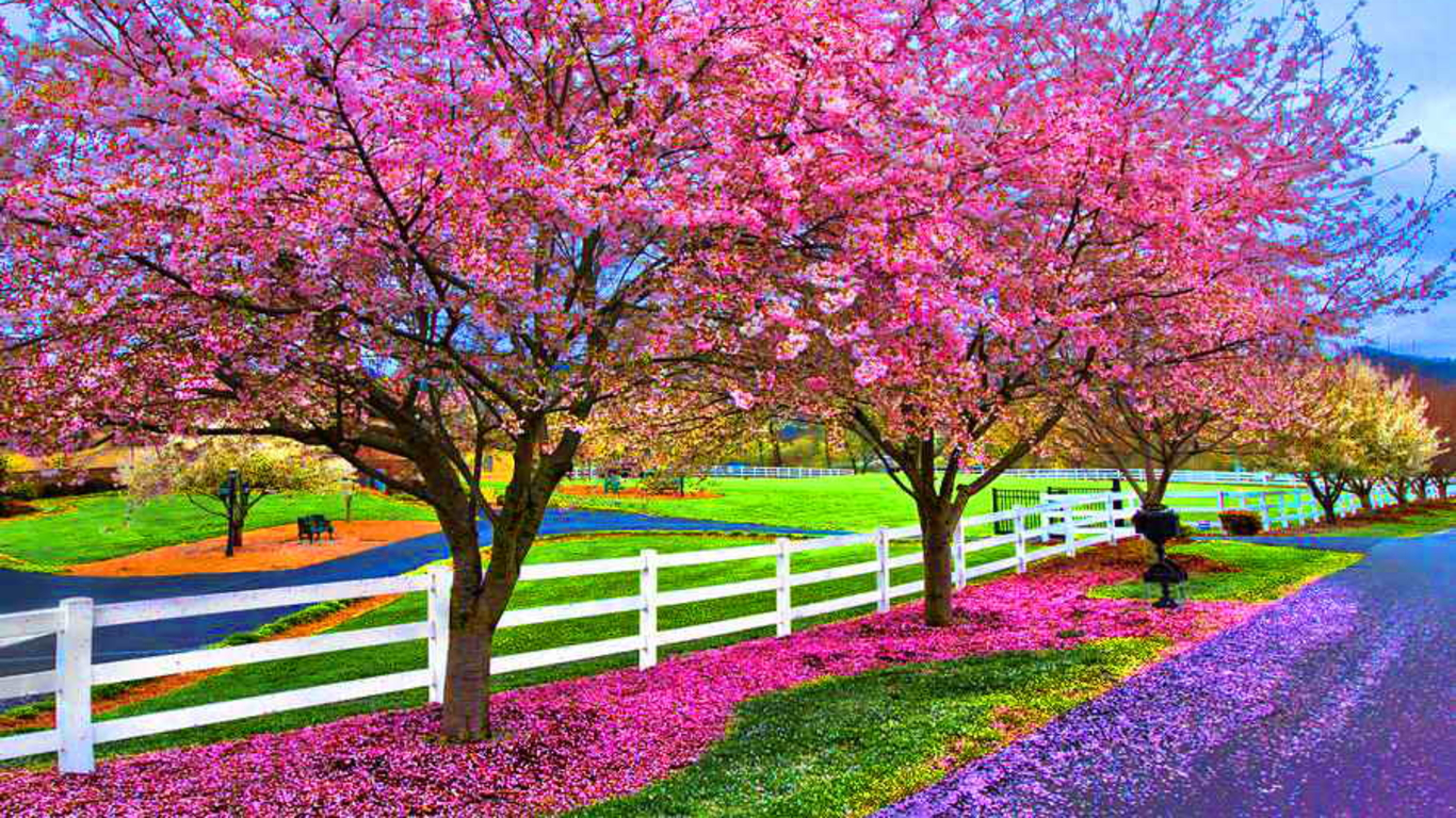 Beautiful Spring Wallpaper for Desktop - WallpaperSafari