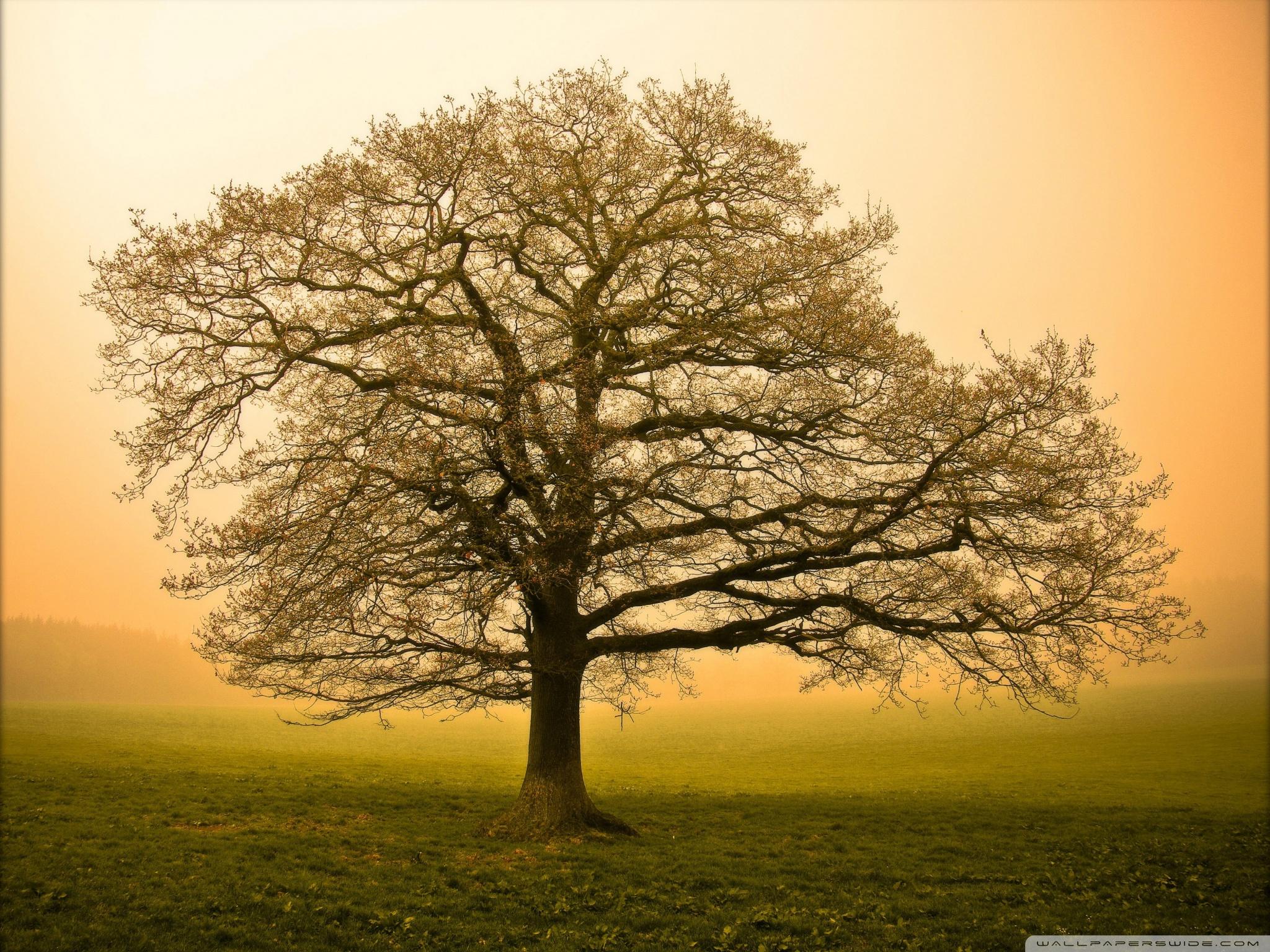 Beautiful Tree HD desktop wallpaper : Widescreen : Fullscreen