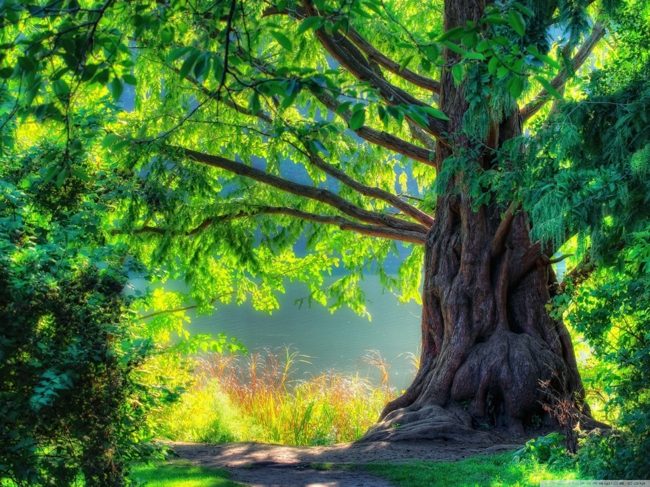 Beautiful Tree HD desktop wallpaper : High Definition : Fullscreen