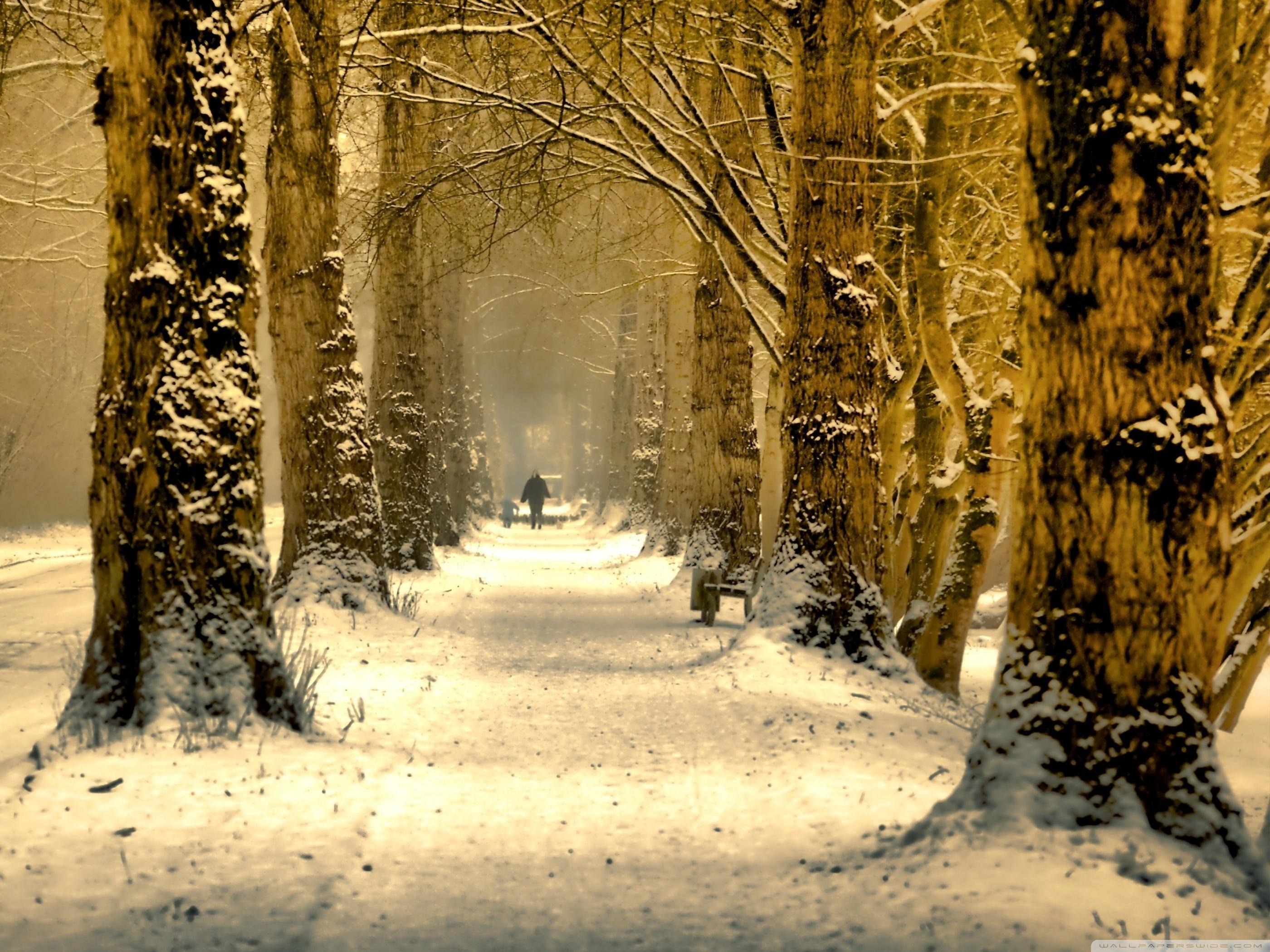 Beautiful Tree Alley, Winter HD desktop wallpaper : Fullscreen