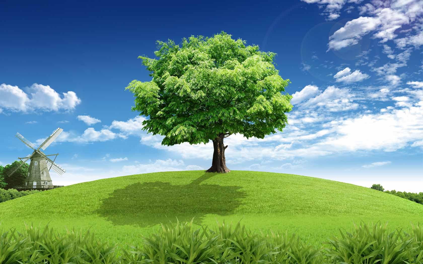 MX-33 Beautiful Tree Wallpaper, Tree Adorable Desktop Wallpapers
