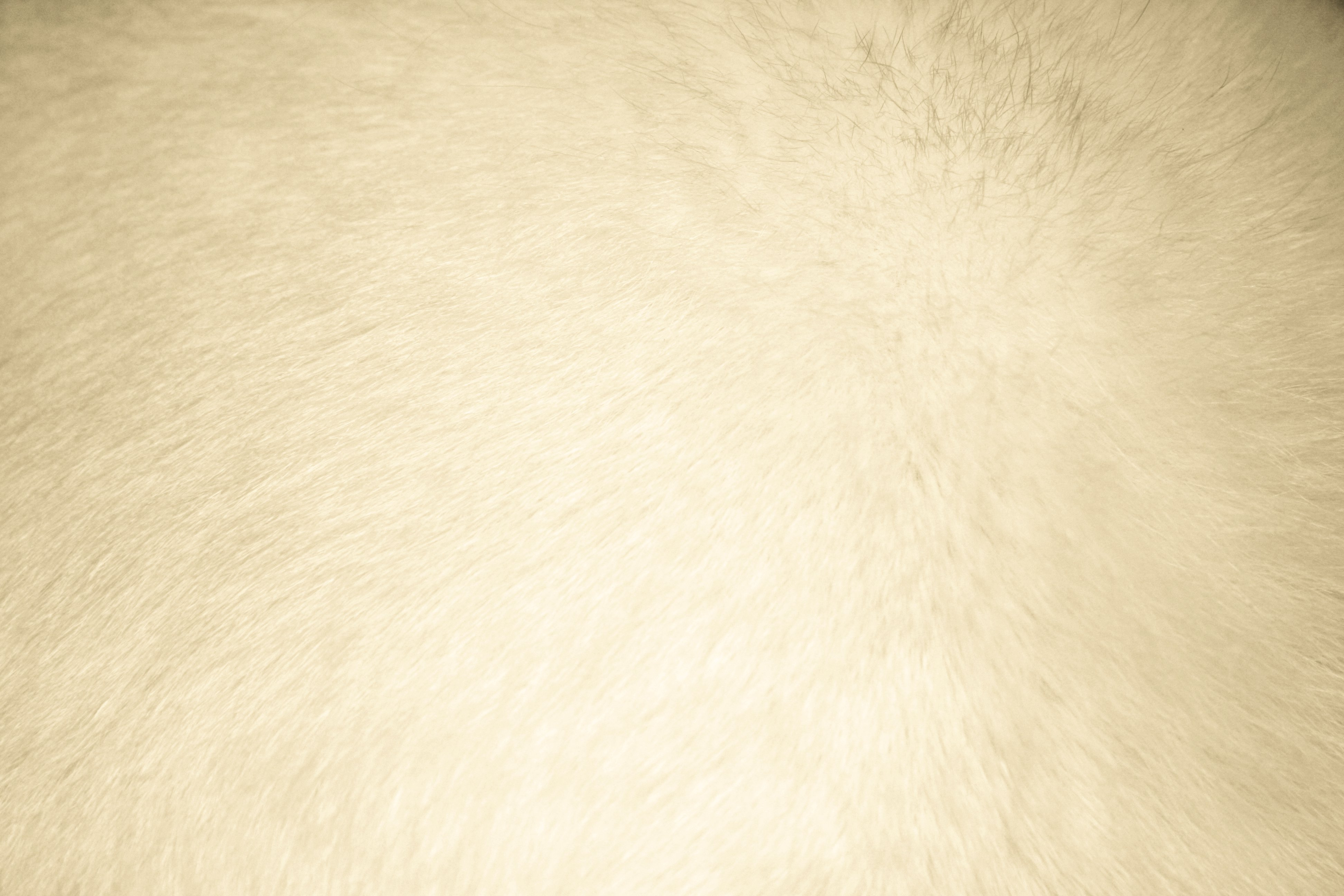 Download Beige Fur Texture Free High Resolution Dimensions