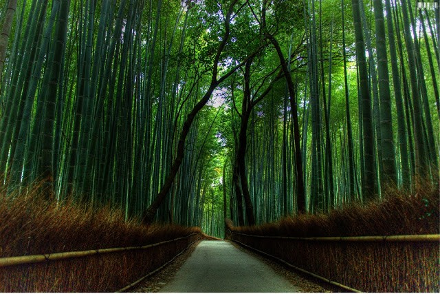 Bamboo forest best desktop backgrounds | Wallpaper view