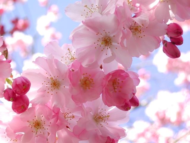 Best Flowers Wallpaper Sf Wallpaper