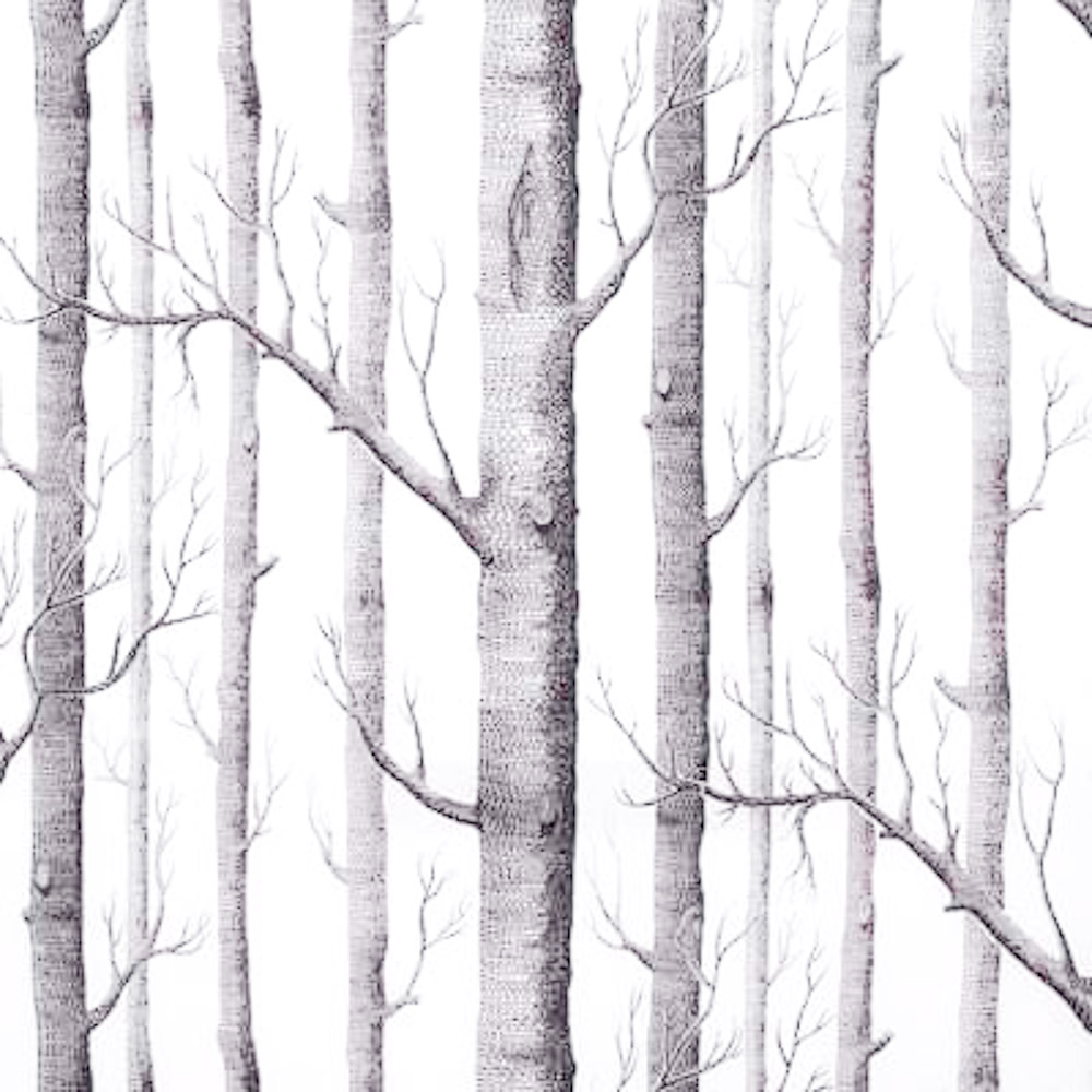 Birch Tree Wallpaper - WallpaperSafari