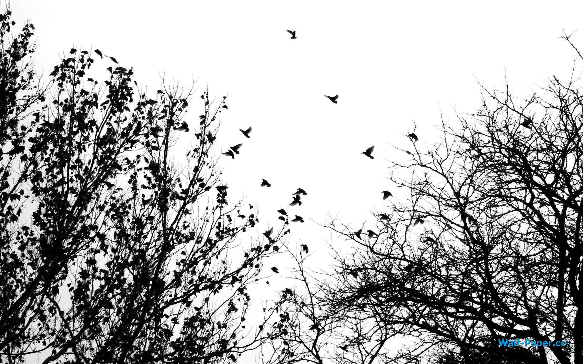 Desktop Pictures: Black And White Bird Wallpaper, Black And White