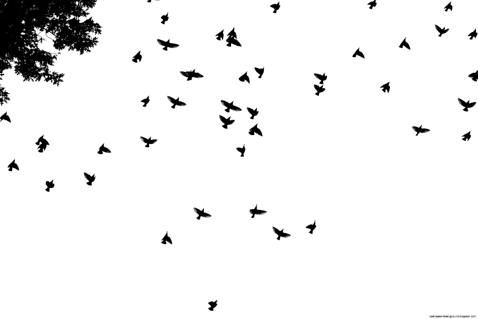 Bird Wallpaper Black And White | Wallpapers Background